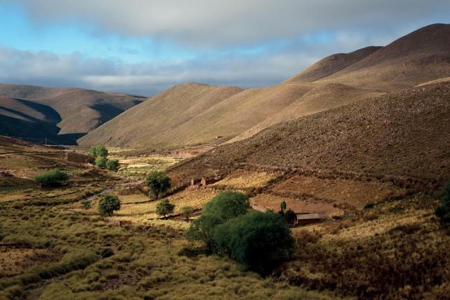 Les vigognes vivent en groupes d'une vingtaine d'individus sur les hauts plateaux de la cordillère des Andes, au Pérou pour ce qui concerne Loro Piana et en Argentine pour Dormeuil (nos photos).
